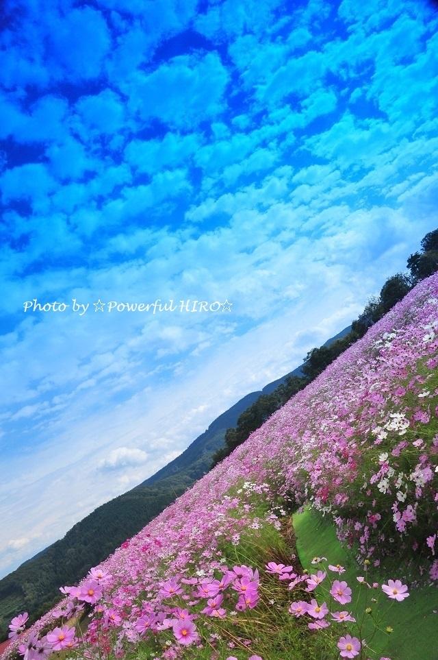 夢の平 (4)