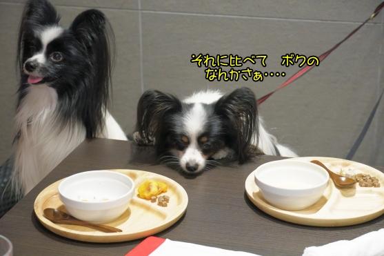 愛犬ヴィレッジ 蓮ぴょん00068746