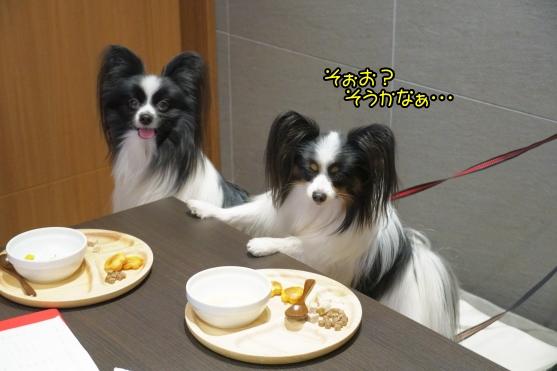 愛犬ヴィレッジ 蓮ぴょん00068748