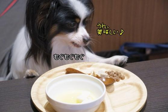 愛犬ヴィレッジ 蓮ぴょん00068750