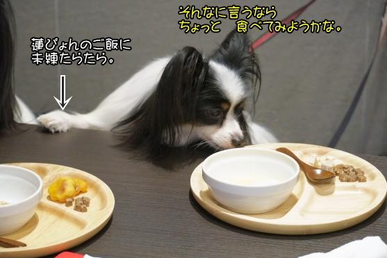 愛犬ヴィレッジ 蓮ぴょん00068747
