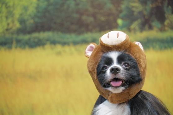 愛犬ヴィレッジ 蓮ぴょん00068808