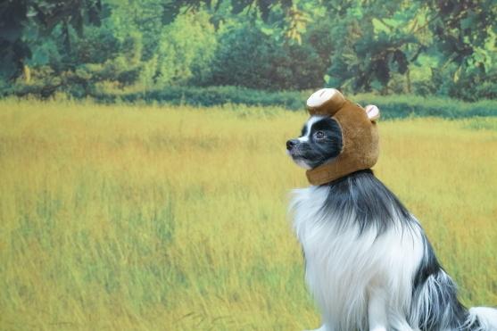 愛犬ヴィレッジ 蓮ぴょん00068809