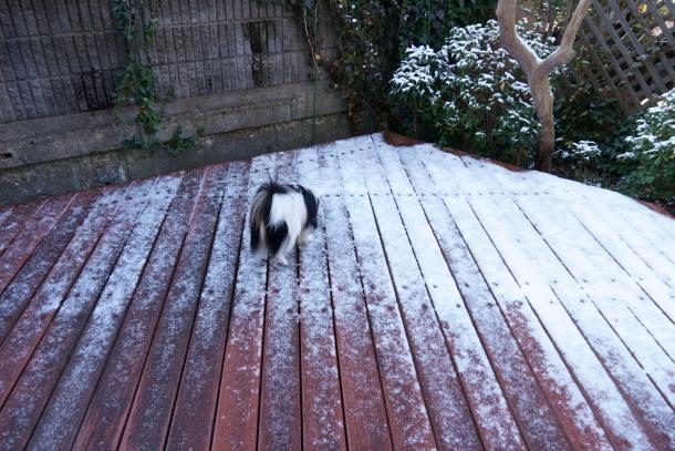 うっすら雪201900069522