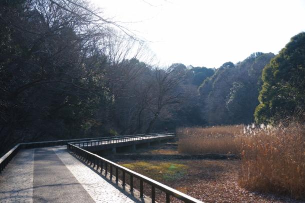 四季の森公園00069832