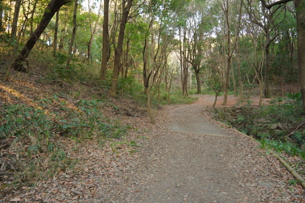 四季の森公園00069835