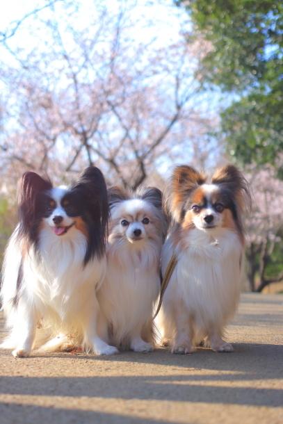 ふるさと公園桜咲き始め00070919