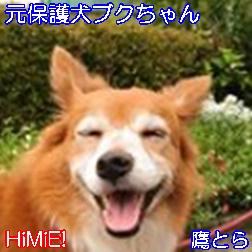 鷹とら@HiMiE!