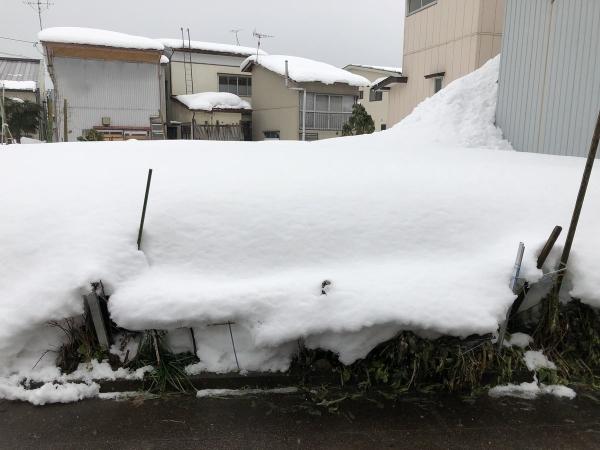 2019-02-16 雪