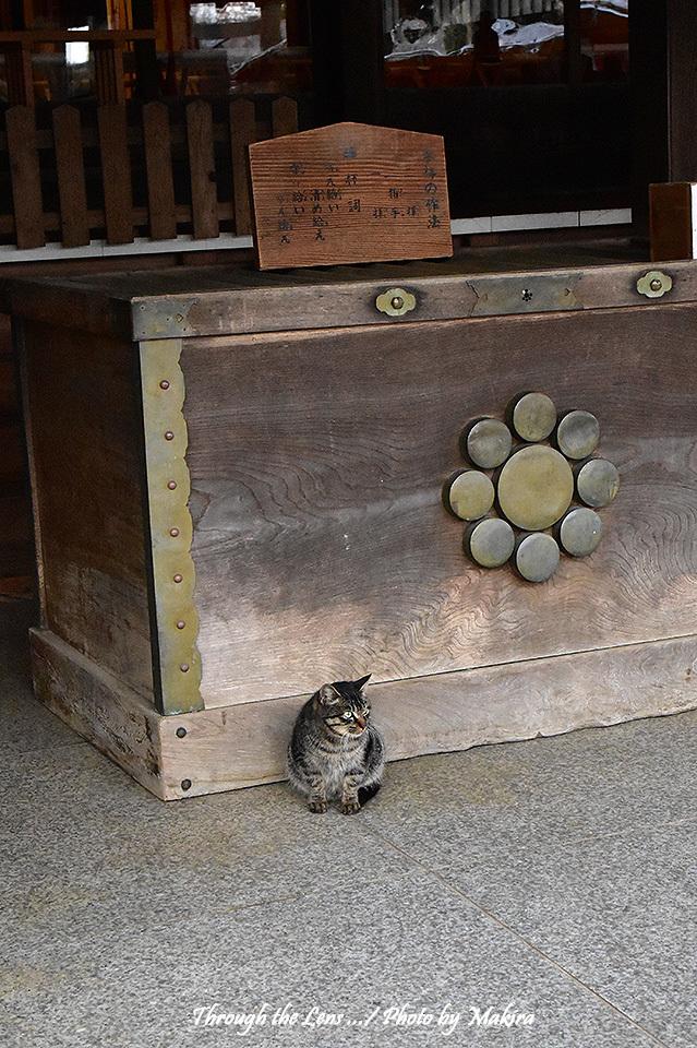 賽銭箱と猫56D1