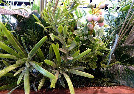 見せかけの植物 1