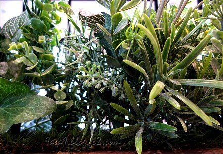 見せかけの植物 2