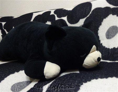 クロちゃんの寝顔