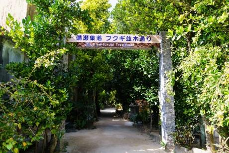 bise_fukugi_18.jpg