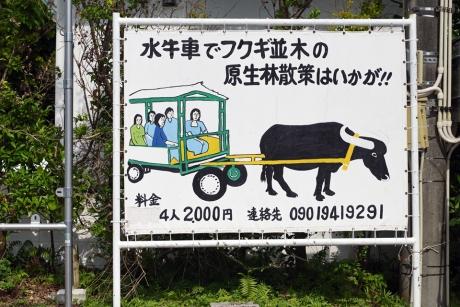 bise_fukugi_20.jpg