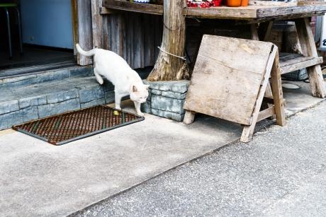 okinawa_niyanko_10.jpg