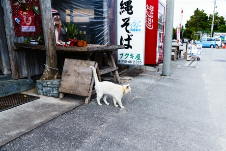 okinawa_niyanko_11.jpg