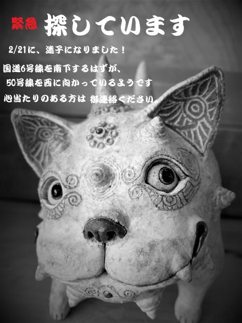DSCF6147 (2)迷い猫