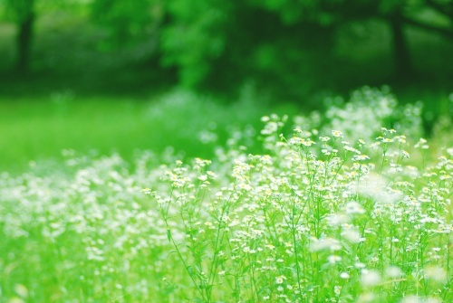 ツクツク画像 緑の草原