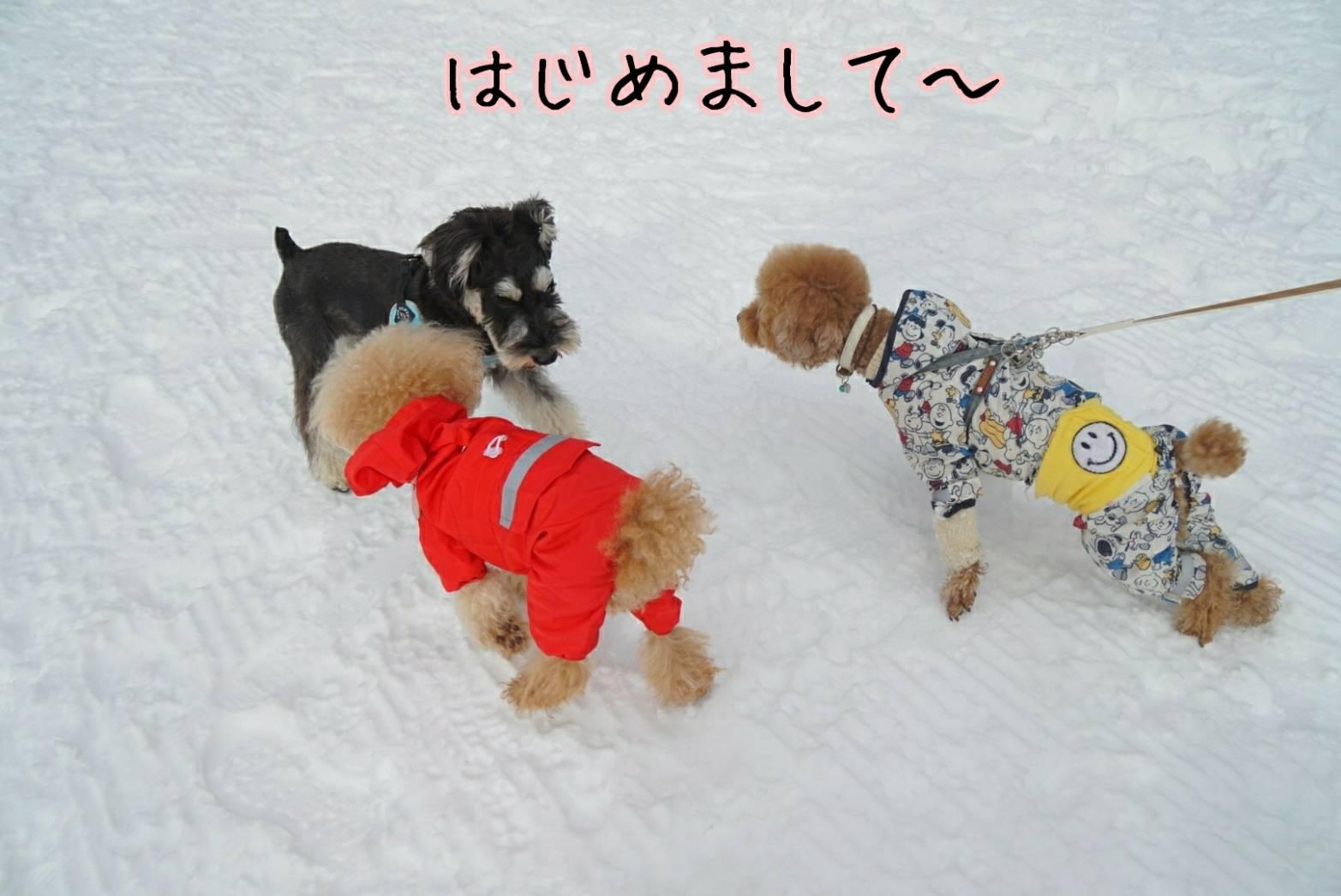 雪キラリ11