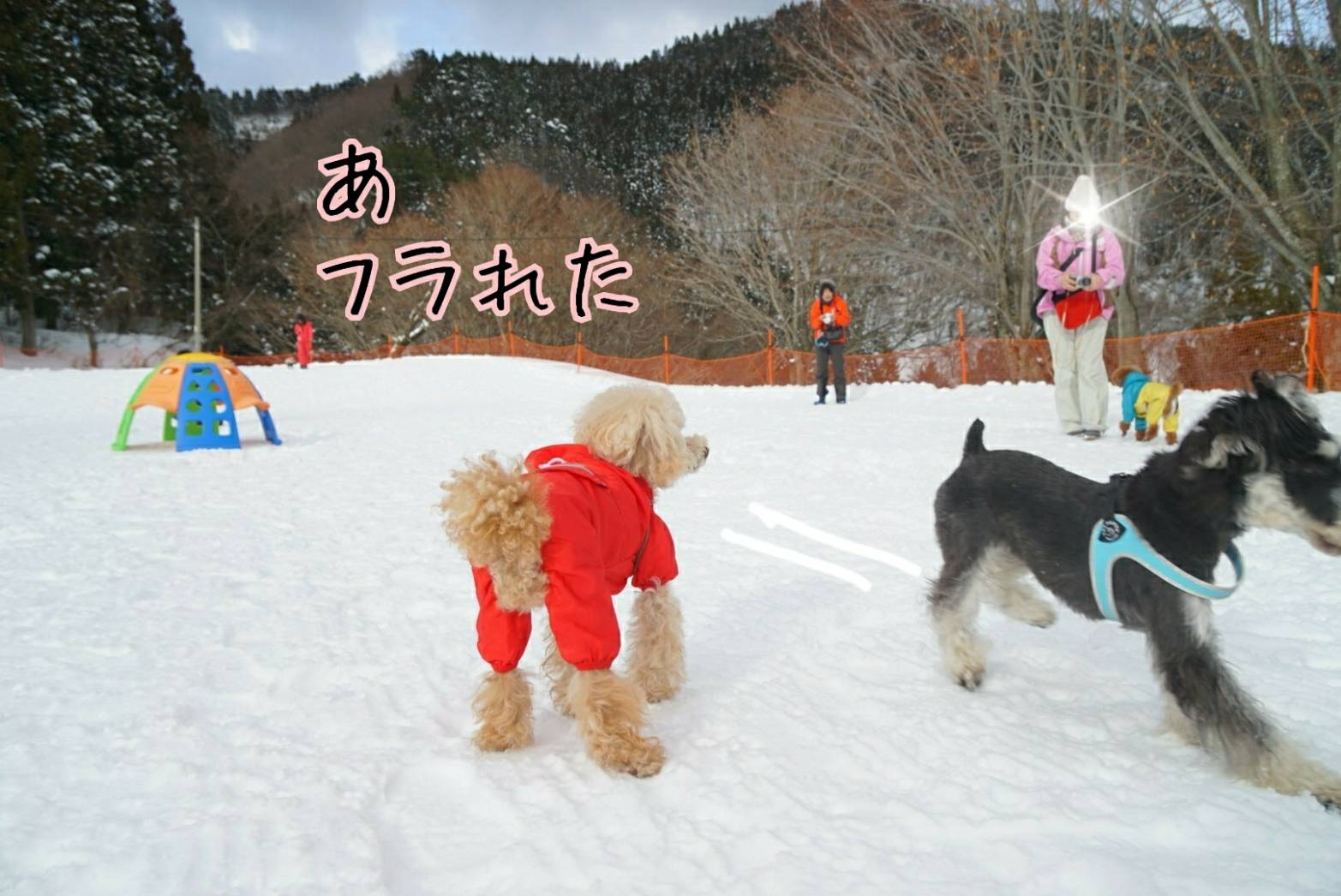 雪キラリ12