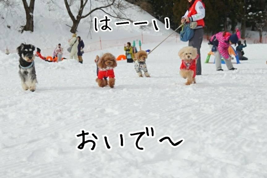 雪キラリ13
