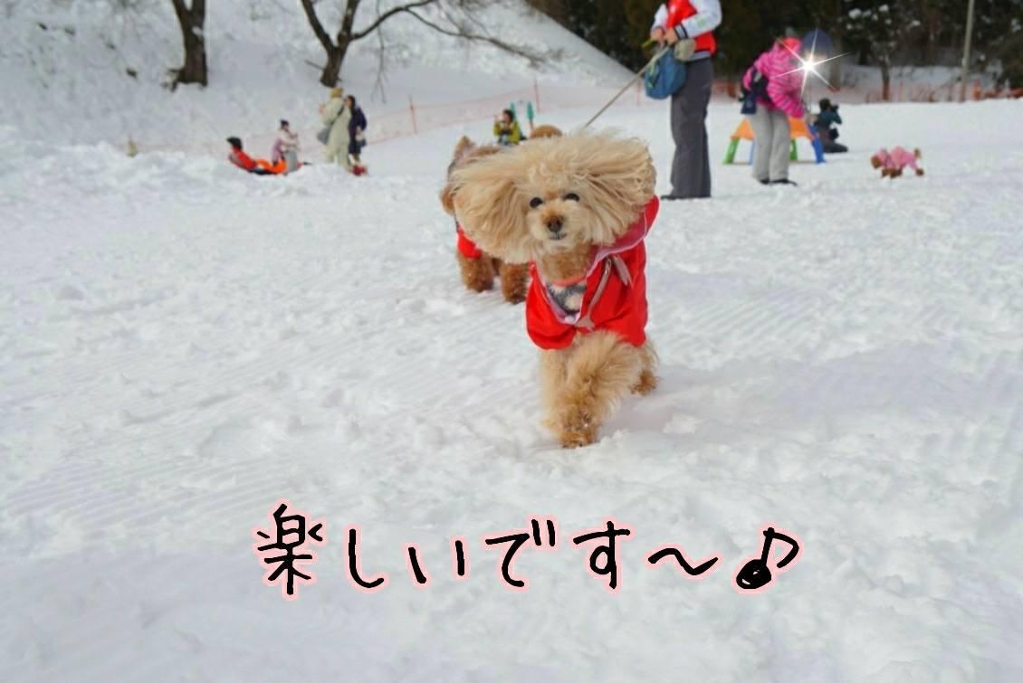雪キラリ15