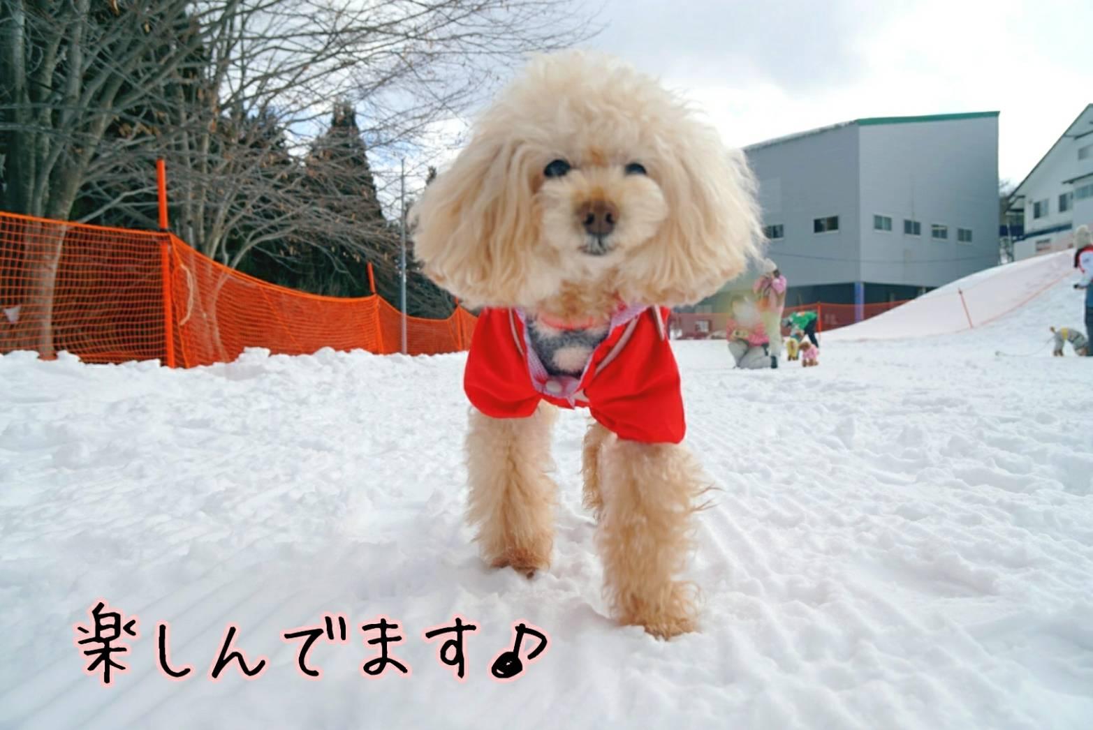 雪キラリ16