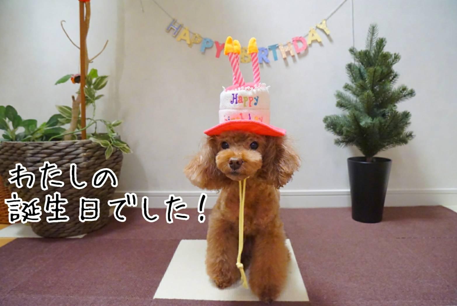 アリアの誕生日とだるま14