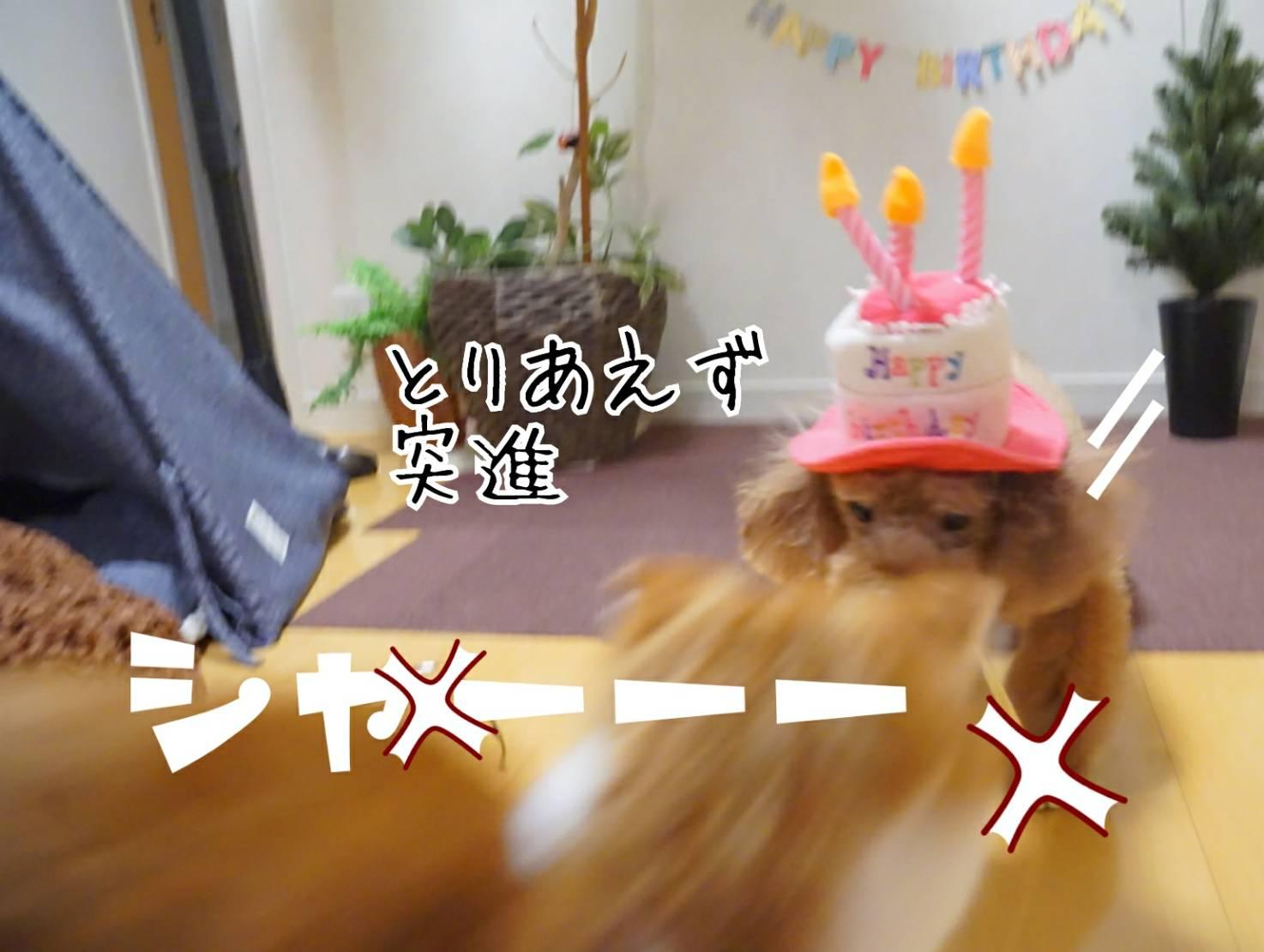 アリアの誕生日とだるま16