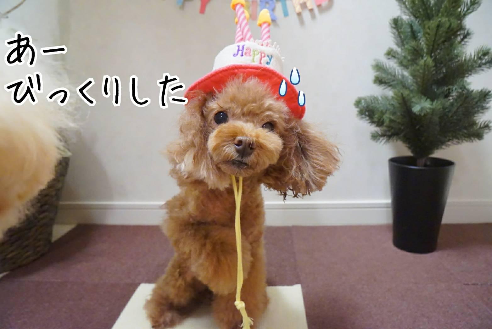 アリアの誕生日とだるま17