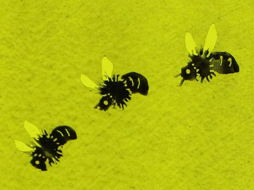 熊蜂の飛行02