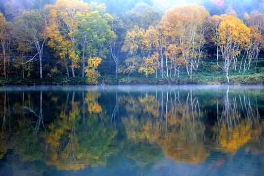 湖面に映える霧に煙るダケカンバの森