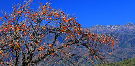 紅の実と青空に映える宝剣岳