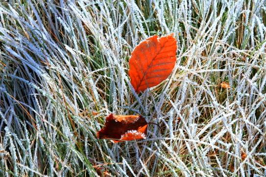 霧氷の枯れ草に落ち葉輝く