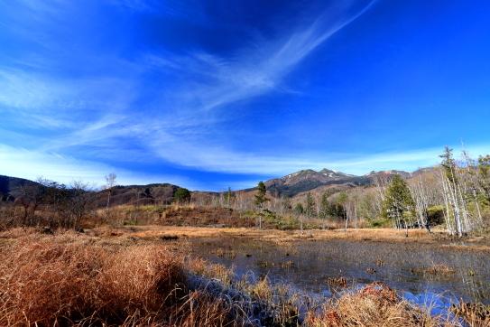 ドジョウ池に映える絹雲
