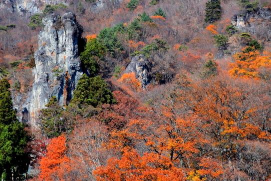 妙義山の奇岩を彩る黄葉