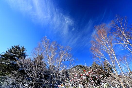 青空に映える雲と雪をまとった赤い実