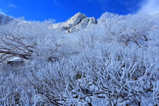 霧氷の花咲く木々と岩峰