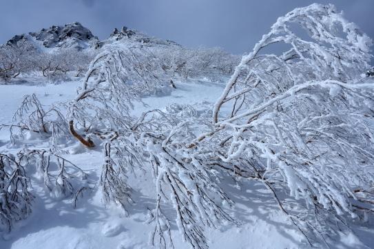 樹氷の林と岩峰