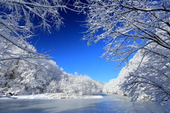 凍て付く三峰川と雪をかぶった森