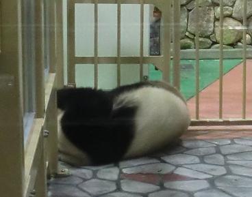 パンダ♪0