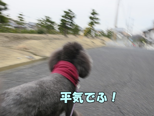 IMG_888720190215.jpg