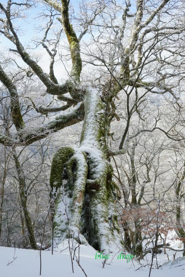 手を広げる樹*