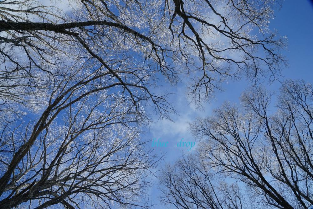 青空と霧氷*