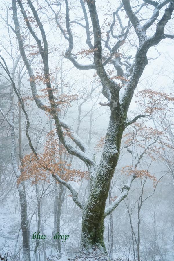 色彩の冬*