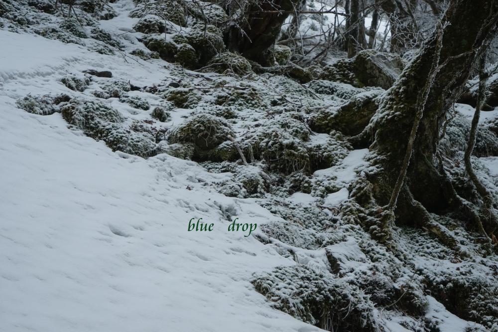 雪降り積む*