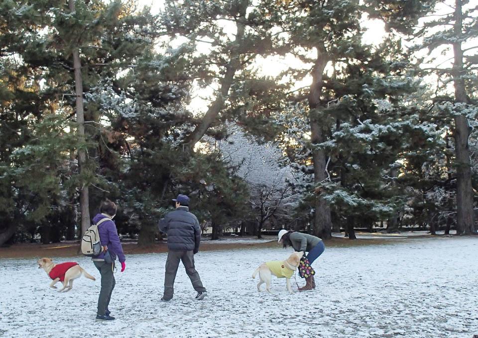 snow_462.jpg