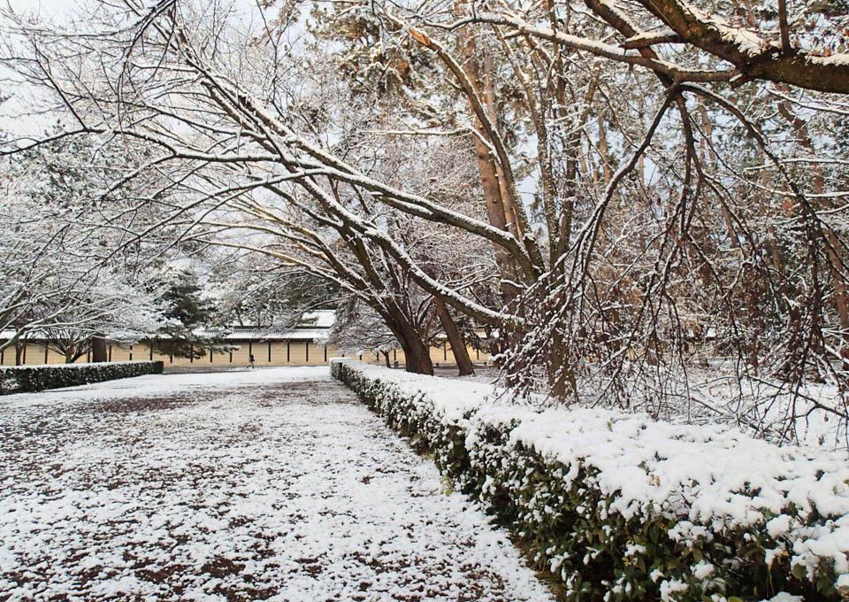 snow_683.jpg