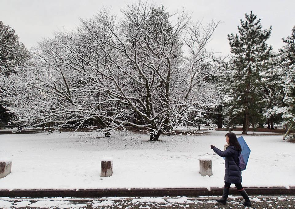 snow_697.jpg